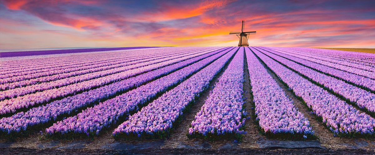 Ländertipps Niederlande