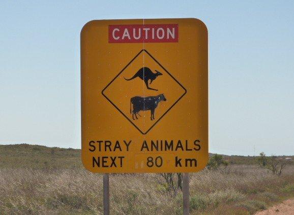 Tiere wirklich eine freie Entfaltung